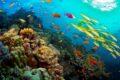 La Giornata Mondiale degli Oceani: Save the Oceans