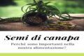 L'importanza dei semi della canapa per il nostro benessere