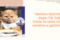 Matteo Salvini, dopo Tik Tok, inizia la lotta fra sardine e gattini