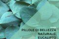 Pillole di bellezza naturale: eucalipto