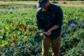 Agrihood: agricoltura di quartiere per una vita più sostenibile.