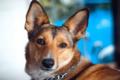 Codipendenza con il cane: è possibile?